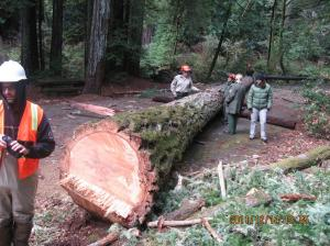 Douglas-fir log