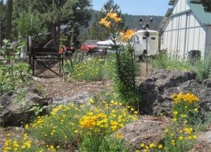 Charlene's garden
