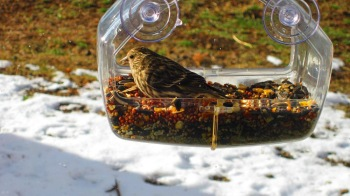 bird in birdfeeder