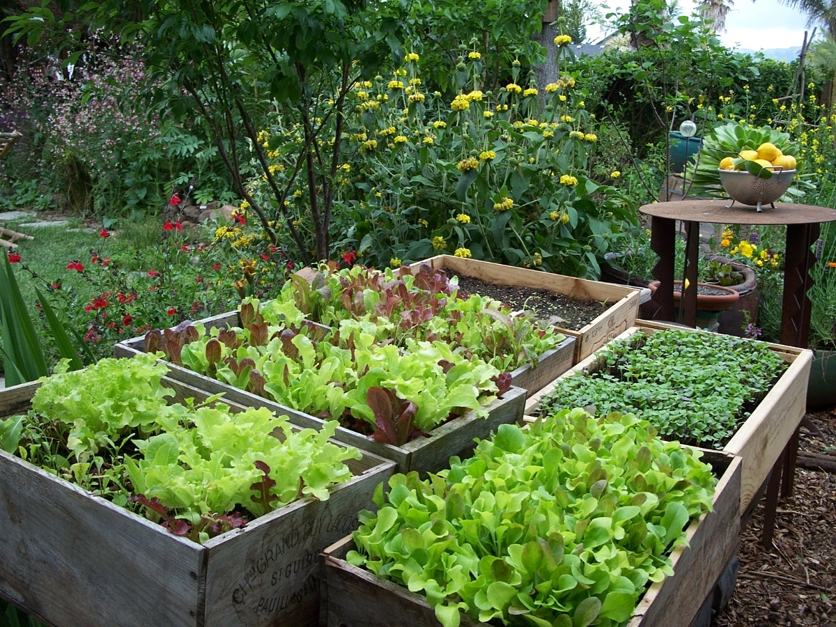 edible garden nutrition made simple