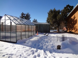 Greenhouse January 2013