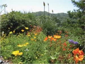 Marin-Friendly Garden