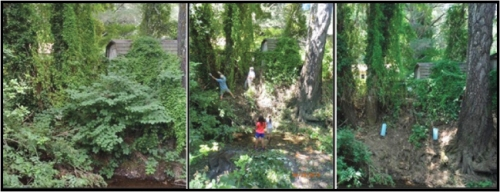 San Geronimo Creek habitat restoration