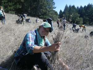 Photo of GGNRA Intern pulling yellow star thistle