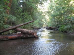 woody debris structures Lagunitas Creek