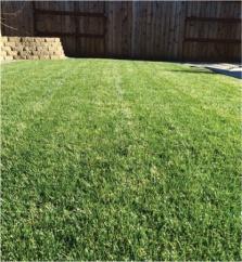 Craig's lawn