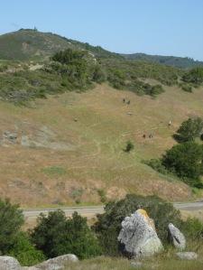 habitat restoration site