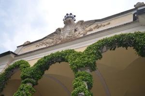 Ficus repens winding around historic buildings
