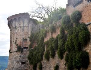 Plants sprouting from a wall San Gimignano