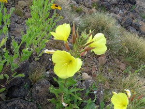 Flowers in dry creek bed