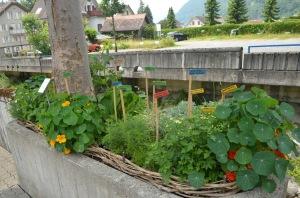 Herb garden along the watercourse in Gersau